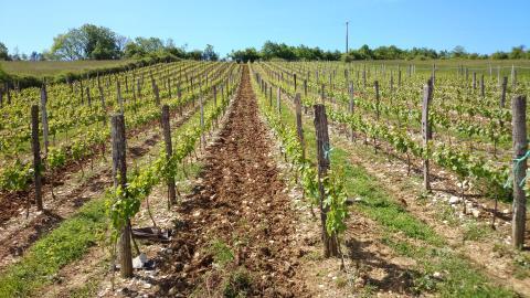 Production vin Cerdon Ceyzériat