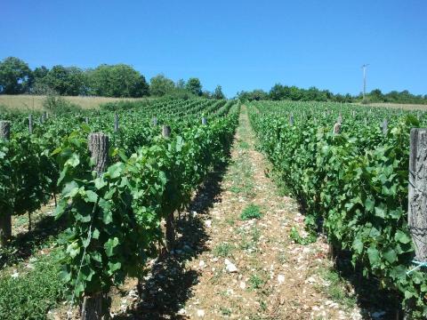 Bon Vin Cerdon La Deserte