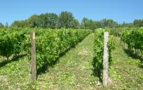 Vente vin Cerdon Ceyzériat
