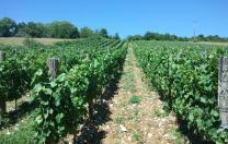 Vin Cerdon Bohas-Meyriat-Rignat